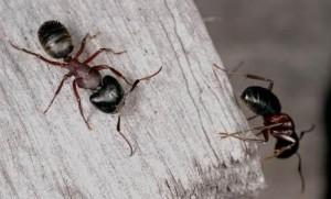 mravalj